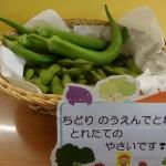 オクラ・枝豆